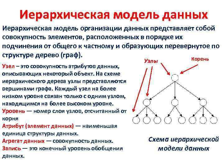 Иерархическая модель данных Иерархическая модель организации данных представляет собой совокупность элементов, расположенных в порядке