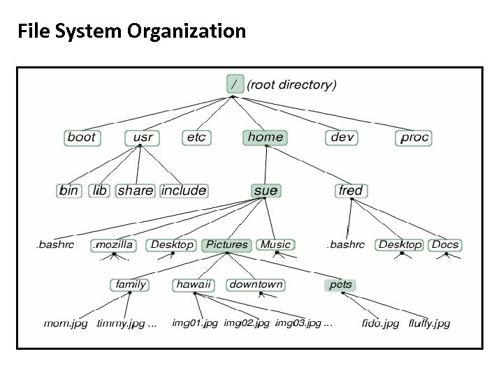 File System Organization