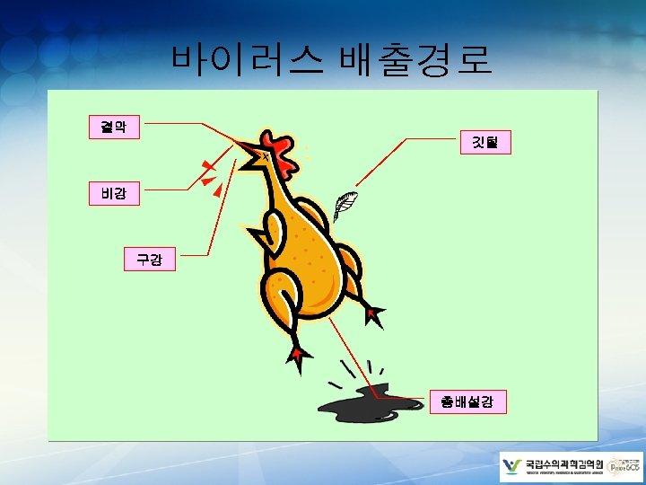 바이러스 배출경로 결막 깃털 비강 구강 총배설강