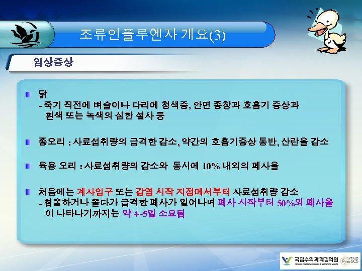 조류인플루엔자 개요(3) 임상증상 닭 - 죽기 직전에 벼슬이나 다리에 청색증, 안면 종창과 호흡기 증상과