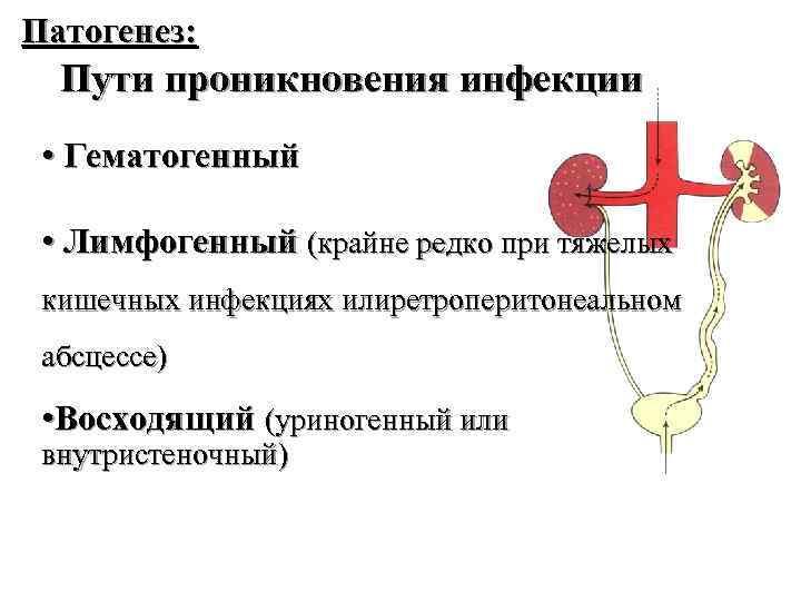 Патогенез: Пути проникновения инфекции • Гематогенный • Лимфогенный (крайне редко при тяжелых кишечных инфекциях