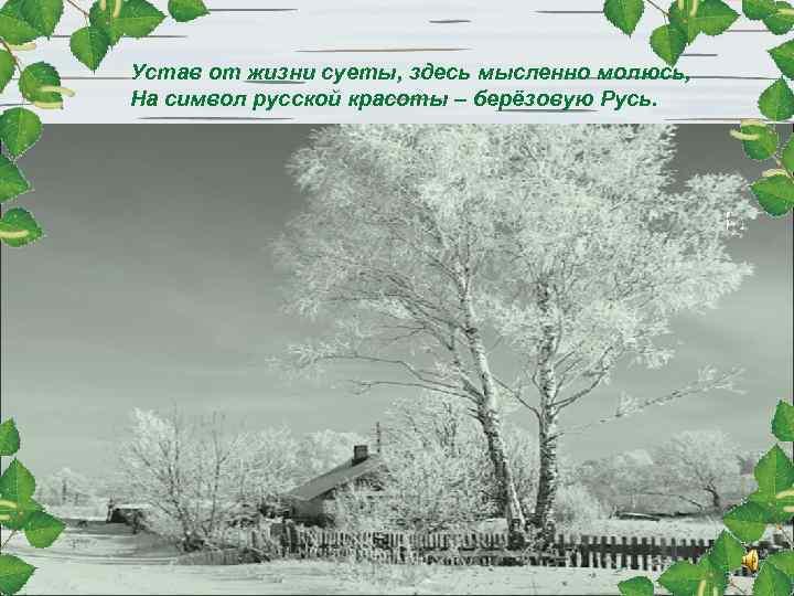 Устав от жизни суеты, здесь мысленно молюсь, На символ русской красоты – берёзовую Русь.