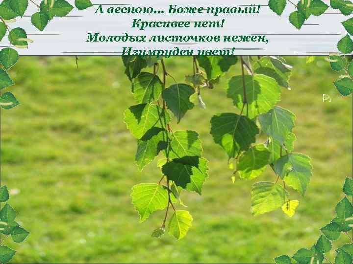А весною. . . Боже правый! Красивее нет! Молодых листочков нежен, Изумруден цвет!