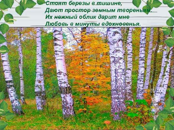 Стоят березы в тишине, Дают простор земным твореньям. Их нежный облик дарит мне Любовь