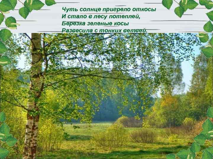 Чуть солнце пригрело откосы И стало в лесу потеплей, Березка зеленые косы Развесилa с