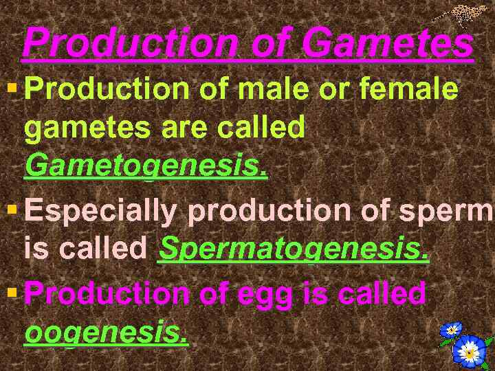 Production of Gametes § Production of male or female gametes are called Gametogenesis. §
