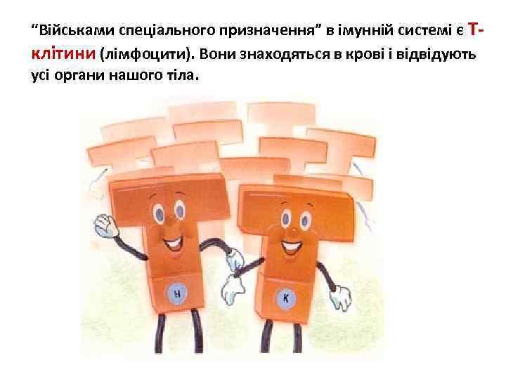 """""""Військами спеціального призначення"""" в імунній системі є Тклітини (лімфоцити). Вони знаходяться в крові і"""