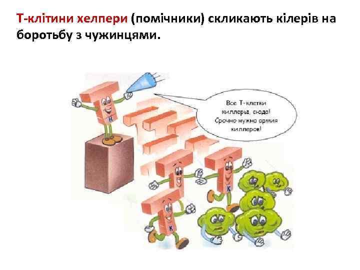 Т-клітини хелпери (помічники) скликають кілерів на боротьбу з чужинцями.