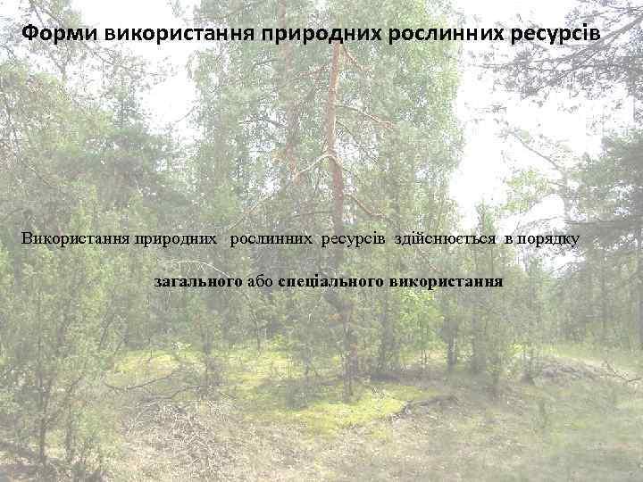 Форми використання природних рослинних ресурсів Використання природних рослинних ресурсів здійснюється в порядку загального або