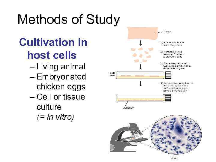 Methods of Study Cultivation in host cells – Living animal – Embryonated chicken eggs