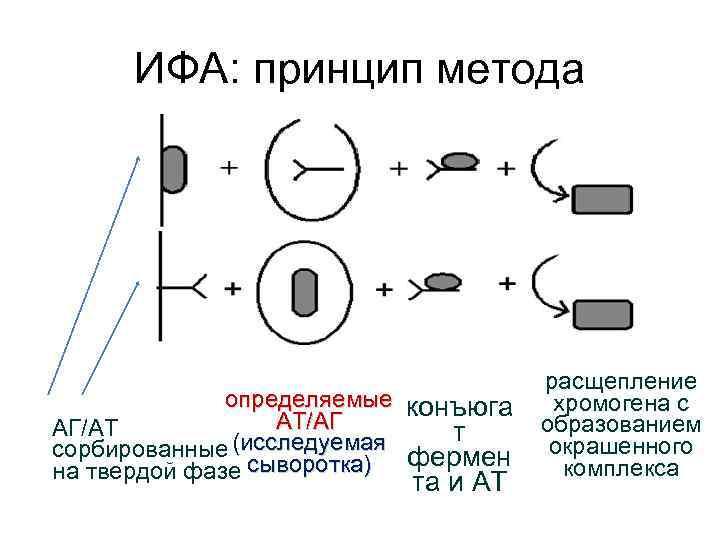 ИФА: принцип метода определяемые конъюга AТ/AГ AГ/AТ т (исследуемая сорбированные фермен на твердой фазе