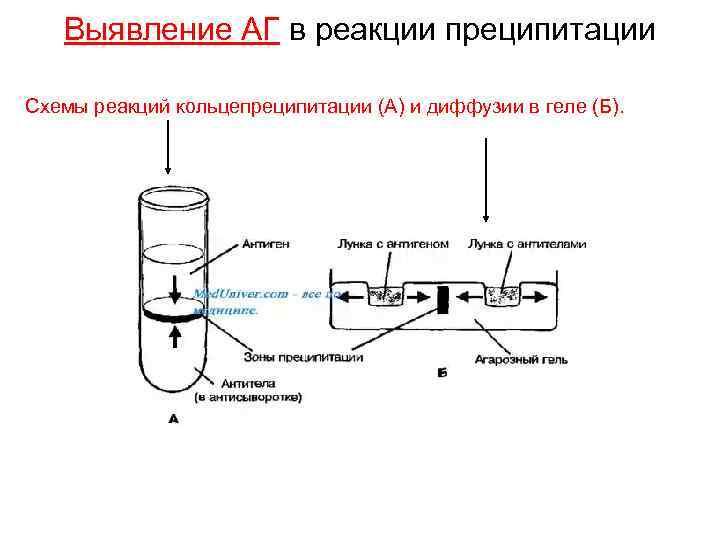 Выявление АГ в реакции преципитации Схемы реакций кольцепреципитации (А) и диффузии в геле (Б).