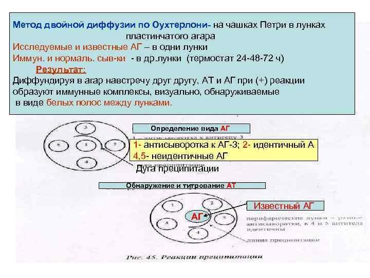 Метод двойной диффузии по Оухтерлони- на чашках Петри в лунках пластинчатого агара Исследуемые и