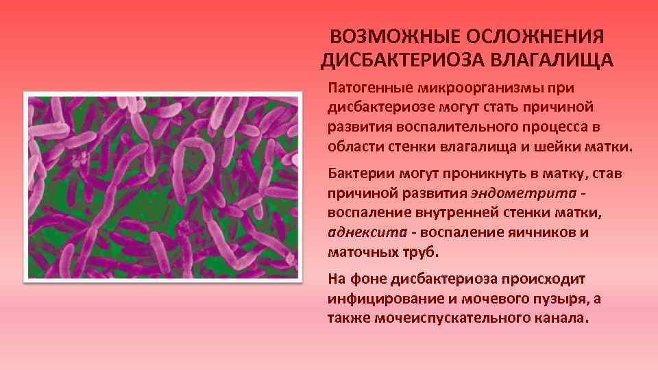 Дисбактериоз в гинекологии диета