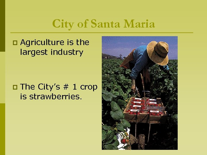 City of Santa Maria p Agriculture is the largest industry p The City's #