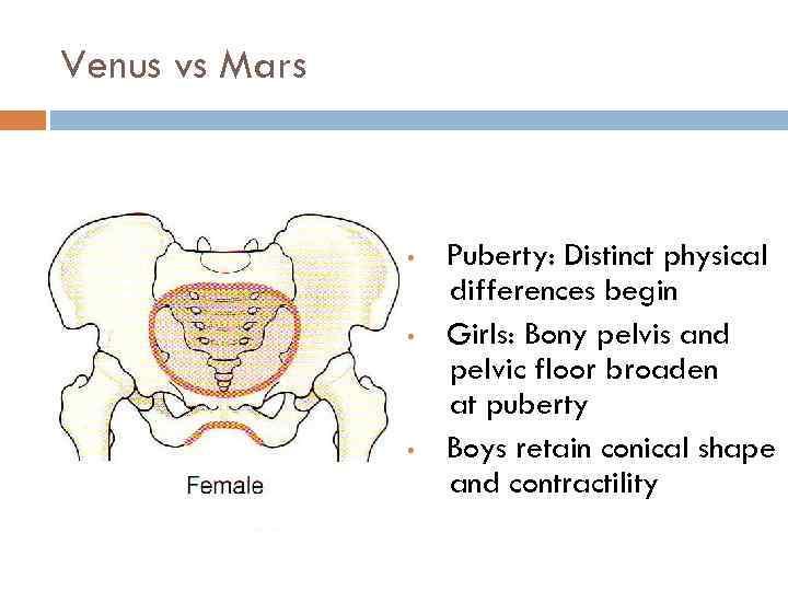 Venus vs Mars • • • Puberty: Distinct physical differences begin Girls: Bony pelvis