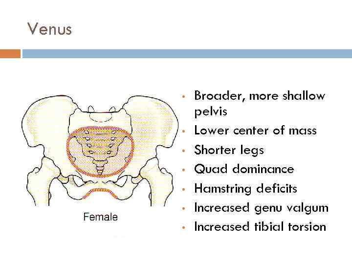 Venus • • Broader, more shallow pelvis Lower center of mass Shorter legs Quad