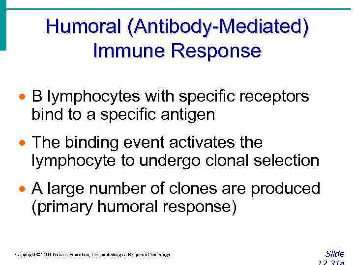 Humoral (Antibody-Mediated) Immune Response · B lymphocytes with specific receptors bind to a specific