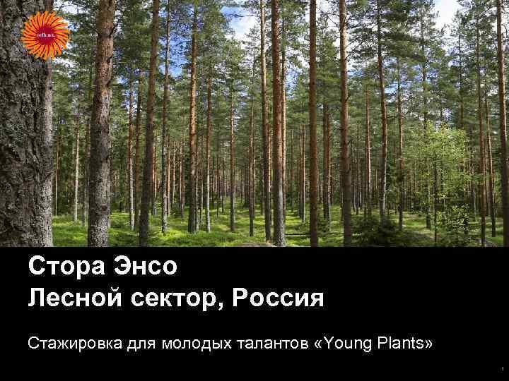 Стора Энсо Лесной сектор, Россия Стажировка для молодых талантов «Young Plants» 1