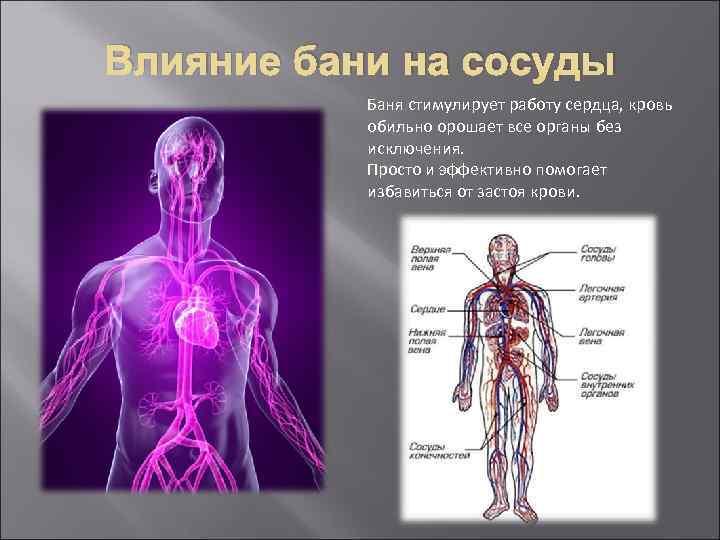 Влияние бани на сосуды Баня стимулирует работу сердца, кровь обильно орошает все органы без