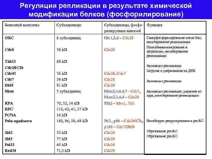 Регуляция репликации в результате химической модификации белков (фосфорилирование) Белковый комплекс Субъединицы, фосфо- Функция рилируемые