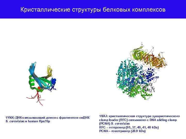 Кристаллические структуры белковых комплексов 1 YNX: ДНК-связывающий домен с фрагментом он. ДНК S. cerevisiae
