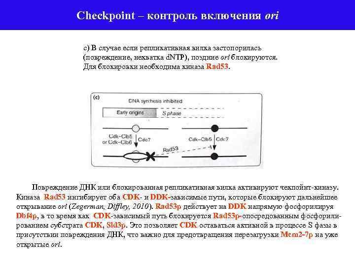 Checkpoint – контроль включения ori с) В случае если репликативная вилка застопорилась (повреждение, нехватка