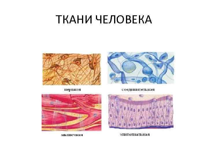 Ткани картинки человека