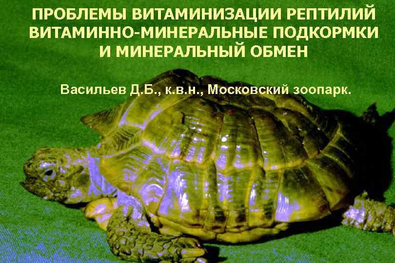 ПРОБЛЕМЫ ВИТАМИНИЗАЦИИ РЕПТИЛИЙ ВИТАМИННО-МИНЕРАЛЬНЫЕ ПОДКОРМКИ И МИНЕРАЛЬНЫЙ ОБМЕН Васильев Д. Б. , к. в.