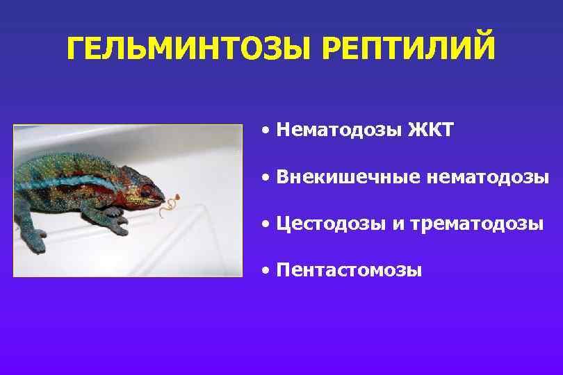 ГЕЛЬМИНТОЗЫ РЕПТИЛИЙ • Нематодозы ЖКТ • Внекишечные нематодозы • Цестодозы и трематодозы • Пентастомозы