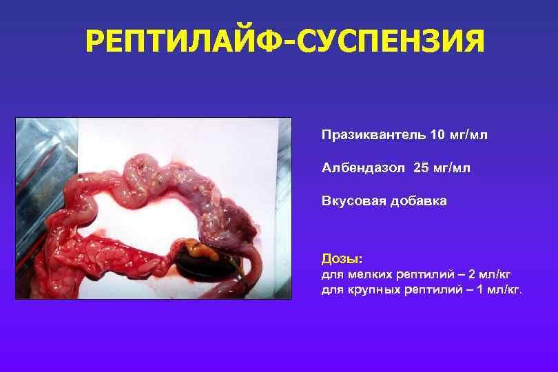 РЕПТИЛАЙФ-СУСПЕНЗИЯ Празиквантель 10 мг/мл Албендазол 25 мг/мл Вкусовая добавка Дозы: для мелких рептилий –