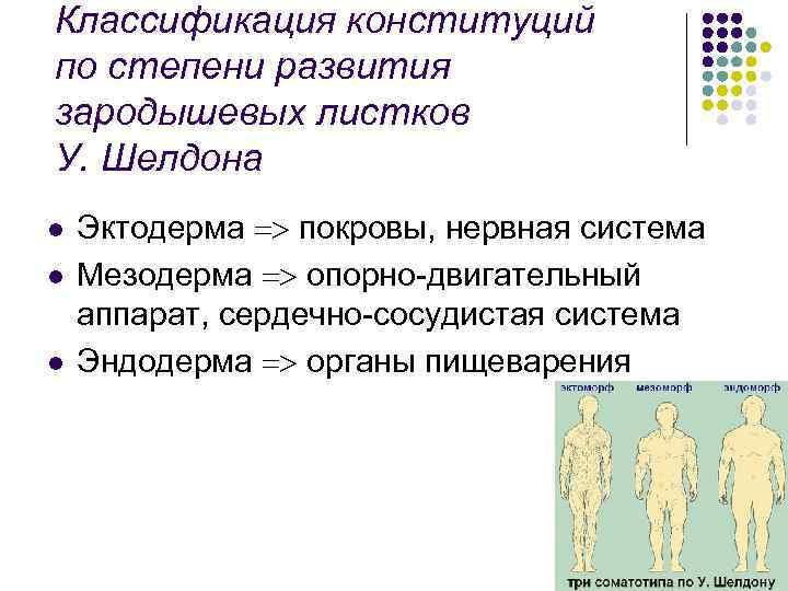 Классификация конституций по степени развития зародышевых листков У. Шелдона l l l Эктодерма покровы,
