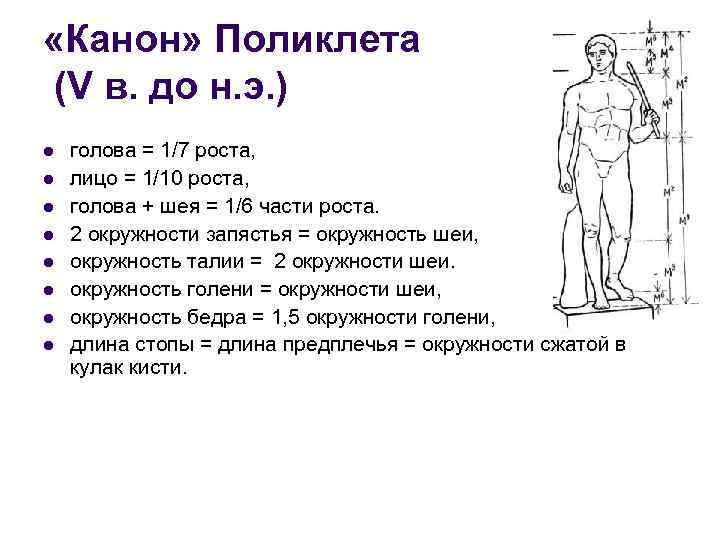 «Канон» Поликлета (V в. до н. э. ) l l l l голова