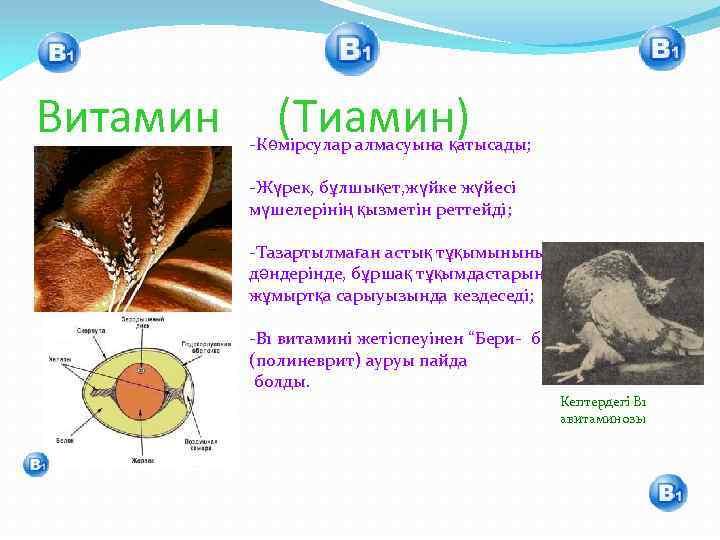 Витамин (Тиамин) -Көмірсулар алмасуына қатысады; -Жүрек, бұлшықет, жүйке жүйесі мүшелерінің қызметін реттейді; -Тазартылмаған астық