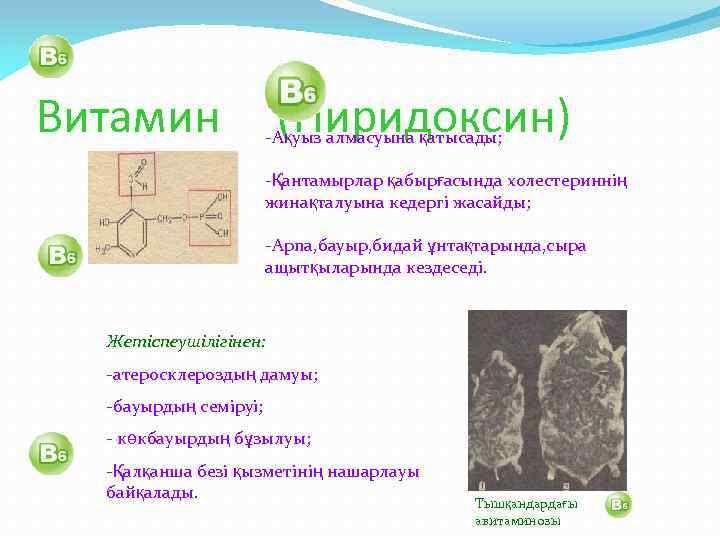 Витамин (Пиридоксин) -Ақуыз алмасуына қатысады; -Қантамырлар қабырғасында холестериннің жинақталуына кедергі жасайды; -Арпа, бауыр, бидай