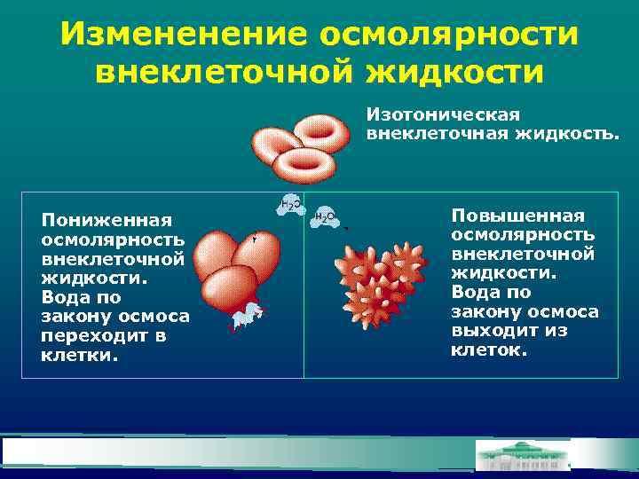 Измененение осмолярности внеклеточной жидкости Изотоническая внеклеточная жидкость. Пониженная осмолярность внеклеточной жидкости. Вода по закону