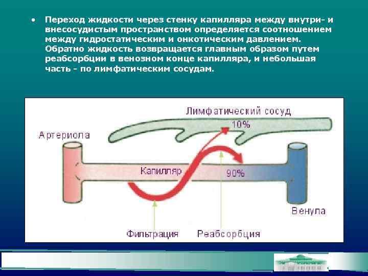 • Переход жидкости через стенку капилляра между внутри- и внесосудистым пространством определяется соотношением
