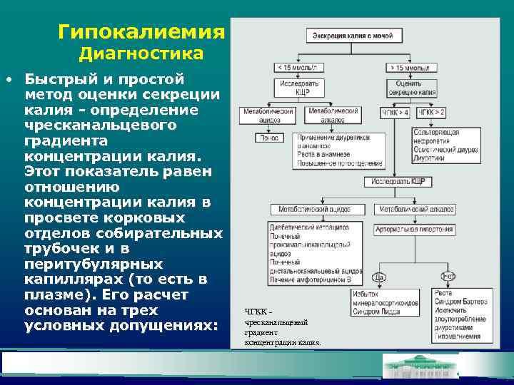 Гипокалиемия Диагностика • Быстрый и простой метод оценки секреции калия - определение чресканальцевого градиента