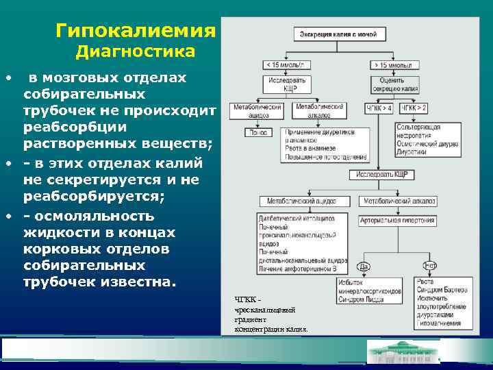 Гипокалиемия Диагностика • в мозговых отделах собирательных трубочек не происходит реабсорбции растворенных веществ; •