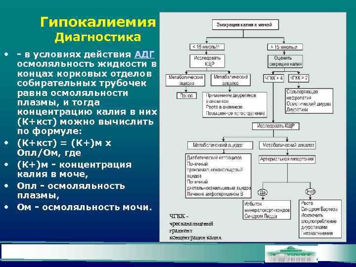 Гипокалиемия Диагностика • - в условиях действия АДГ осмоляльность жидкости в концах корковых отделов