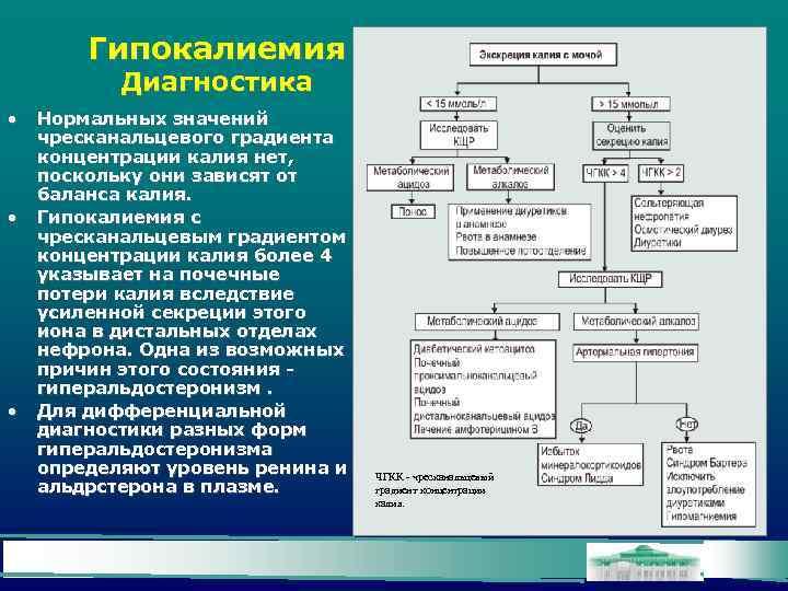 Гипокалиемия Диагностика • • • Нормальных значений чресканальцевого градиента концентрации калия нет, поскольку они