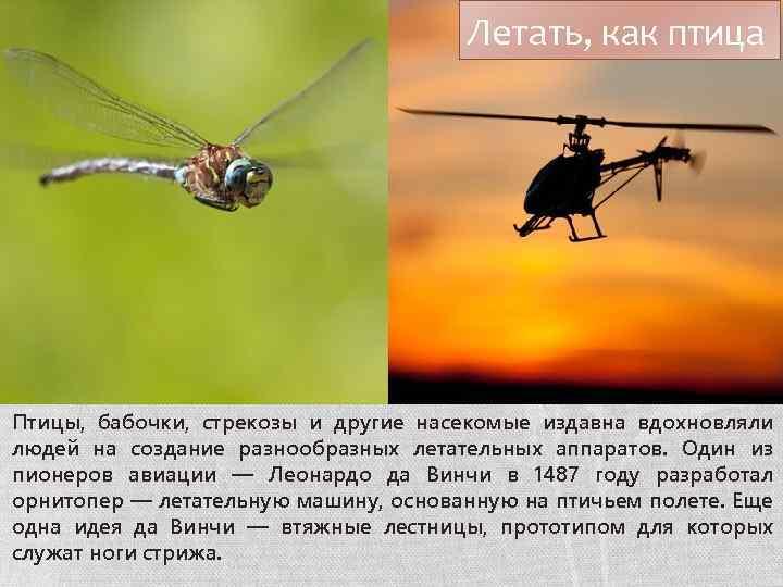 Летать, как птица Птицы, бабочки, стрекозы и другие насекомые издавна вдохновляли людей на создание
