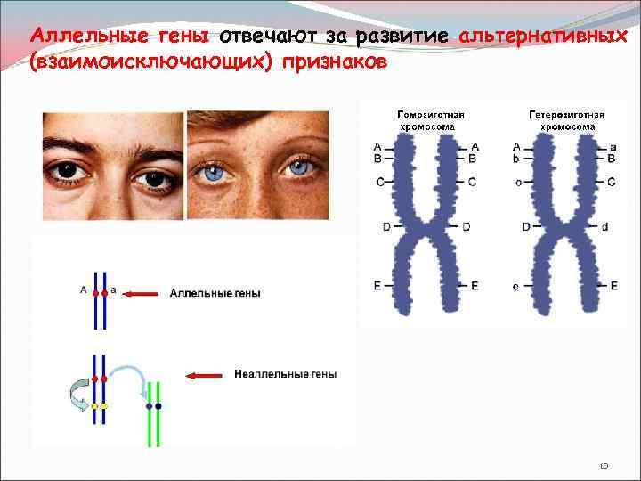 Бронхиальная астма патогенез картинки сайт агентства