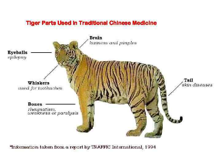 Tiger Parts Used in Traditional Chinese Medicine
