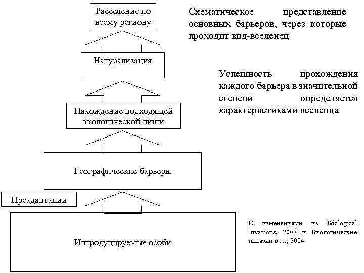 Расселение по всему региону Схематическое представление основных барьеров, через которые проходит вид-вселенец Натурализация Нахождение
