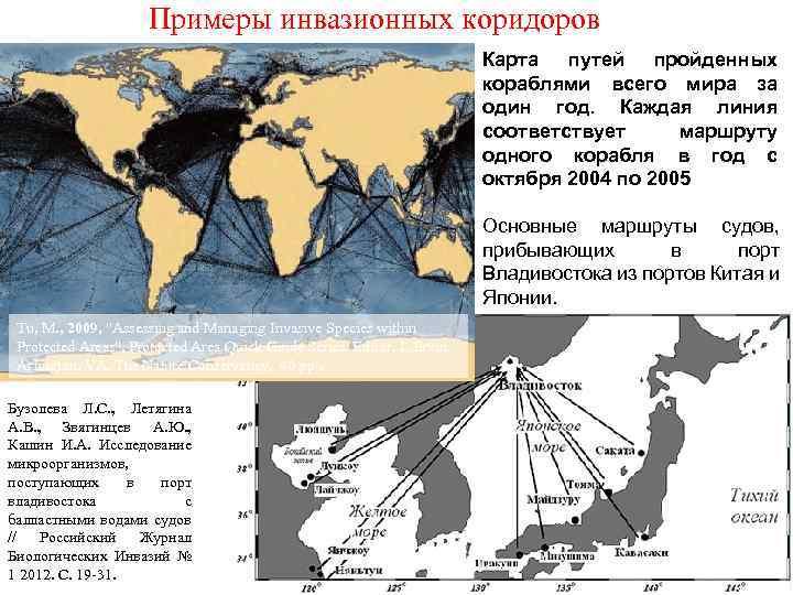 Примеры инвазионных коридоров Карта путей пройденных кораблями всего мира за один год. Каждая линия
