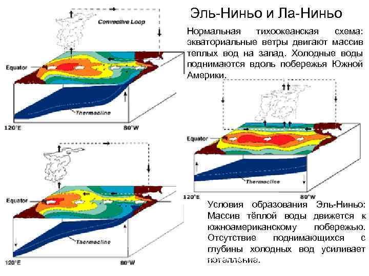 Эль-Ниньо и Ла-Ниньо Нормальная тихоокеанская схема: экваториальные ветры двигают массив теплых вод на запад.