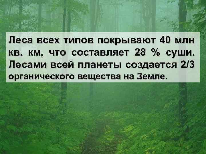 Леса всех типов покрывают 40 млн кв. км, что составляет 28 % суши. Лесами