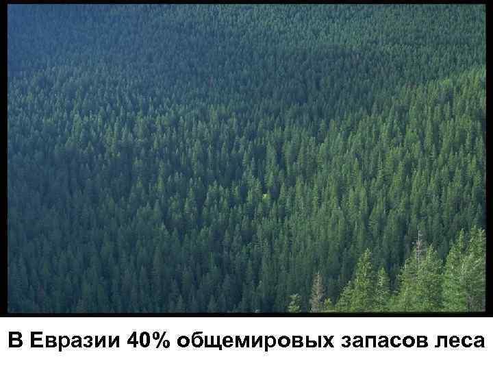 В Евразии 40% общемировых запасов леса