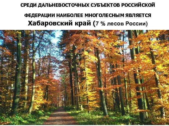 СРЕДИ ДАЛЬНЕВОСТОЧНЫХ СУБЪЕКТОВ РОССИЙСКОЙ ФЕДЕРАЦИИ НАИБОЛЕЕ МНОГОЛЕСНЫМ ЯВЛЯЕТСЯ Хабаровский край (7 % лесов России)